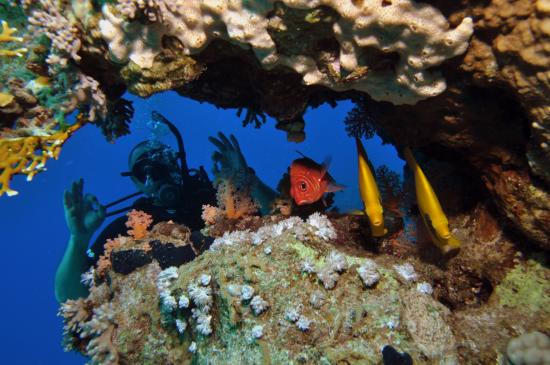 Picture of reef oasis dive club - Reef oasis dive club ...