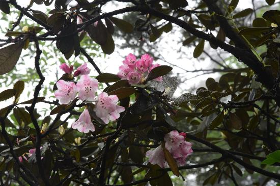 Rhododendron Conservation Area