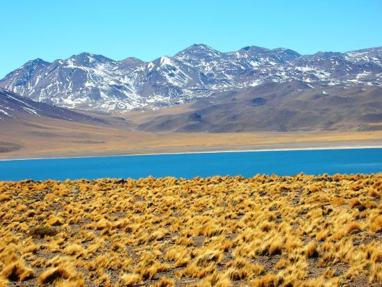 Región de Atacama, Chile: Atacama - Lagunas altiplânicas
