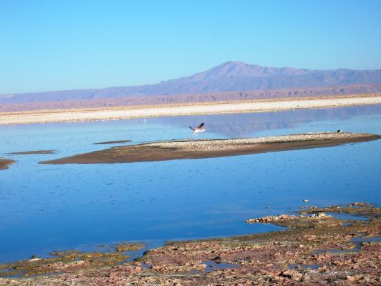 Región de Atacama, Chile: Salar de Atacama - Lagoa Chaxa