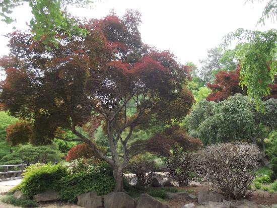 Japanese Garden Picture Of Birmingham Botanical Gardens