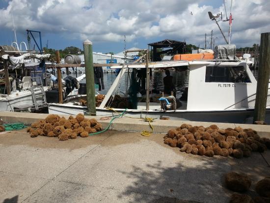 fresh off the boat picture of tarpon springs sponge docks tarpon rh tripadvisor com