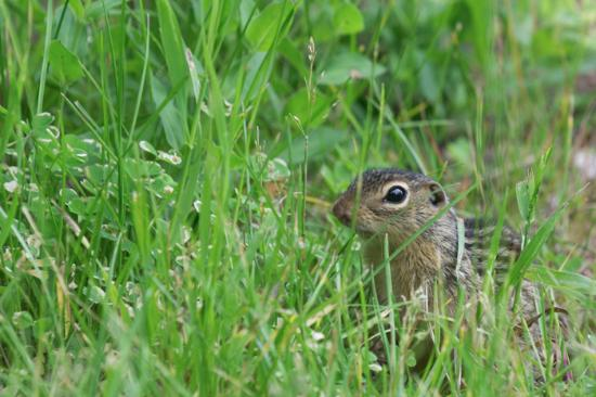 Mackinaw Mill Creek Campground: Wildlife