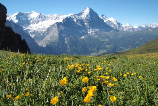 Grindelwald, Zwitserland: on the trail