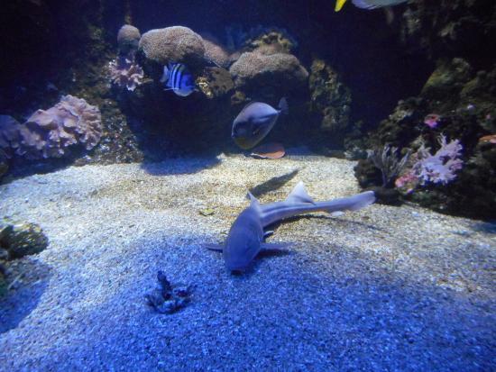 grondhaaitjes photo de aquarium du cap d agde cap d agde tripadvisor