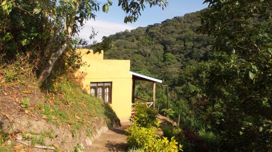 Gorilla Valley Lodge