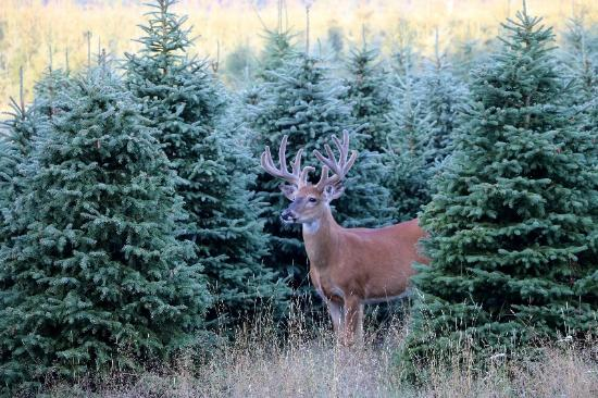 Manton, MI: Hopkins Creek Whitetails Ranch