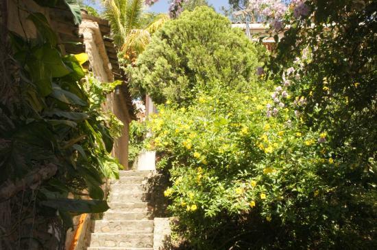 Gracias, Honduras: Jardin - garden