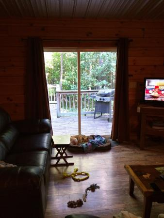 Perfect Springwood Cabins: Watching Us Take Pictures!