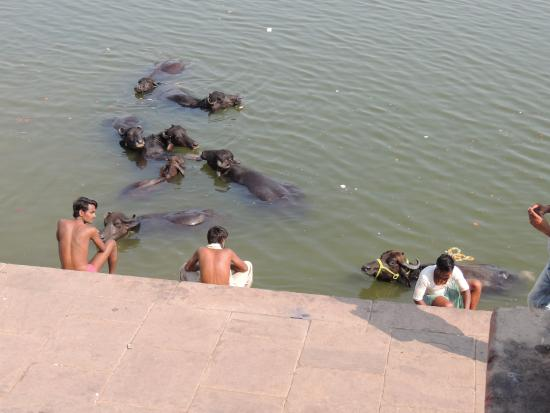 my trip on the ganges river Ganges river - kolkata  visit the sacred city of varanasi with the comfort of a private tour on a full day trip on this tour, you will see the ancient,.
