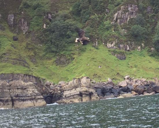 ‪Brigadoon Sea Eagle and Wildlife Boat Trips‬