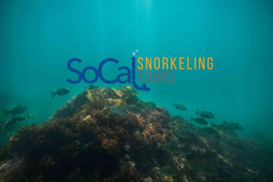 Dana Point, CA: SoCal Snorkeling Tours