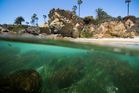 Dana Point, Kalifornien: SoCal Snorkeling Tours