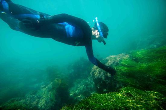 Dana Point, CA: SoCal Snorkeling Tours