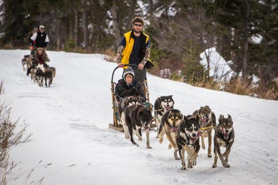 Absaroka Dogsled Treks: Drive your own team or ride along!