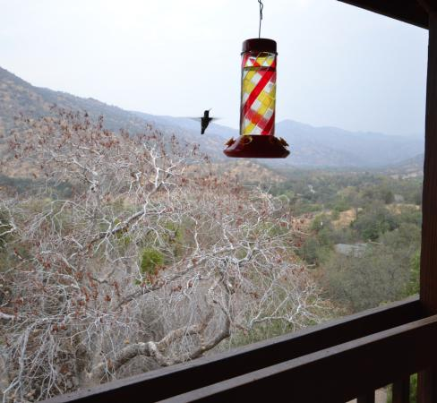 The Log House Lodge: Hummingbird feeder