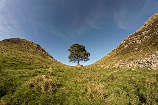 Northumberland National Park, UK: The Sycamore Tree
