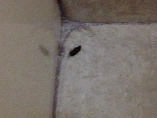 Quality Inn: bug I killed