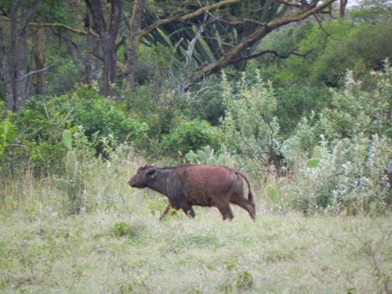 Soysambu Conservancy: Soysambu