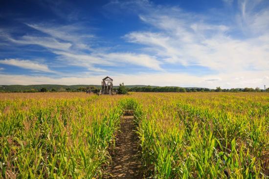 Poughquag, NY: Corn Maze