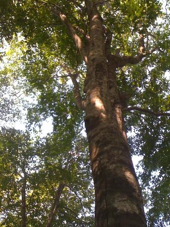 Utasai Beech Forests