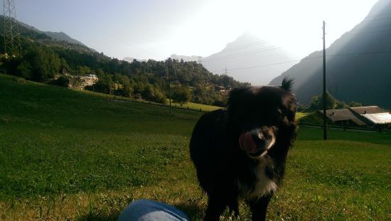 Gasthaus Bergheim: Sam the dog yodelling