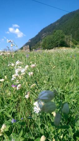 Gasthaus Bergheim: wildflowers