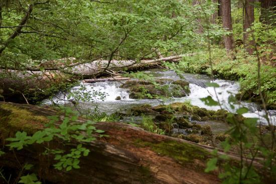 Prospect, Oregón: View of the creek outside cabin #21