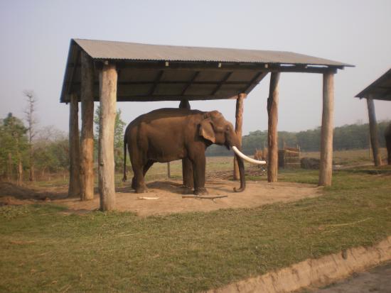 elephant in chitwan national park tour yeti trail adventure picture of yeti trail adventure
