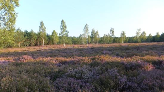 Naturpark Niederlausitzer Heidelandschaft