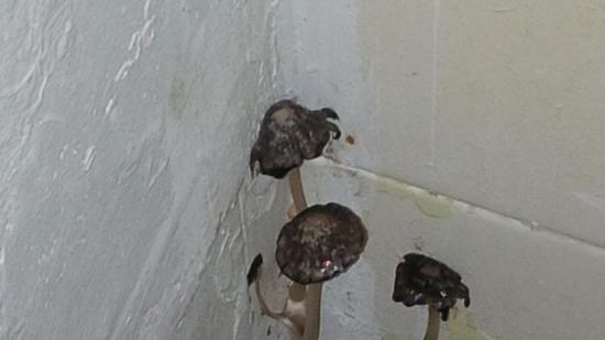 Penrose Hotel: Mushrooms in the bathroom!