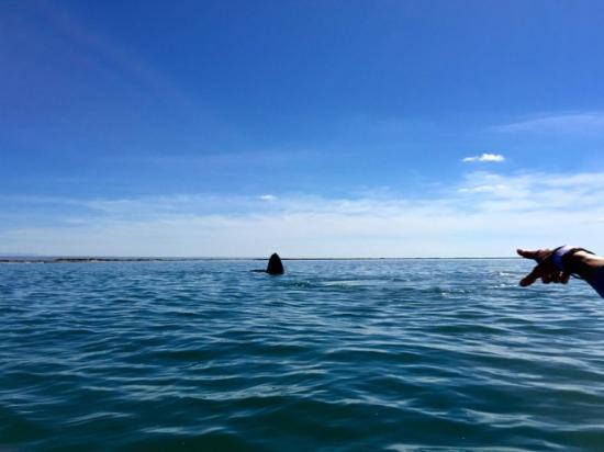 Baja California Sur, Μεξικό: sky hop