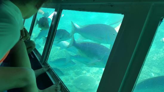 Sub Sea Explorer: Sub-Sea Explorer