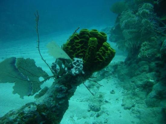Monte Cristi, Dominikanische Republik: photo7.jpg