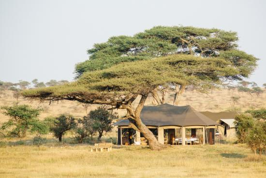 Namiri Plains, Asilia Africa