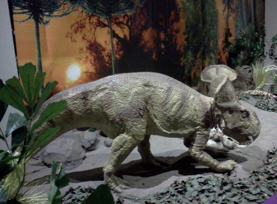 Dinosaur Picture Of Rochester Museum Science Center Rochester