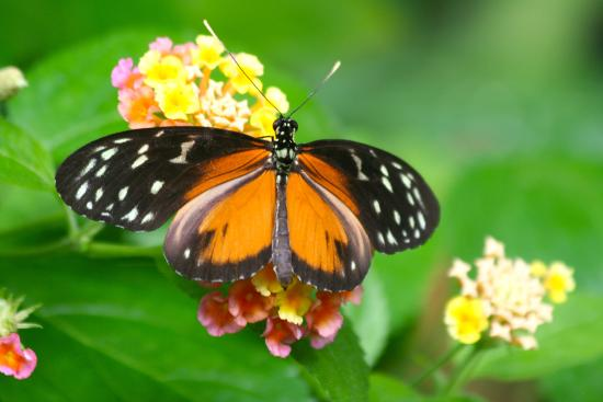 Lots of color variety - Picture of Victoria Butterfly Gardens ...