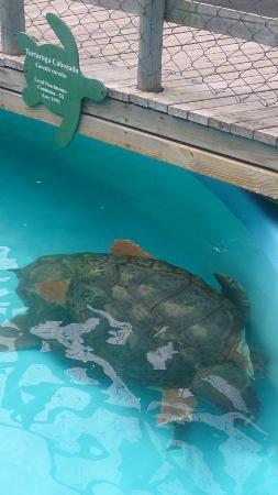 Aberto da Tartaruga Marinha Museum