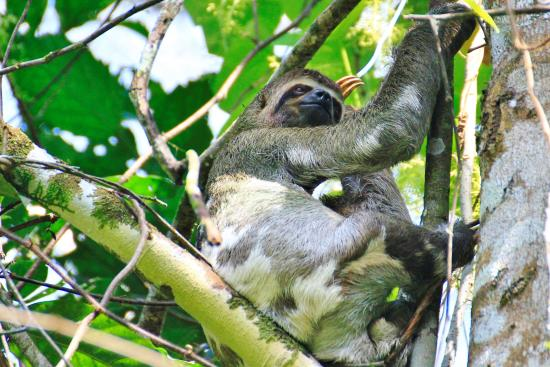 Amazonia Expeditions' Tahuayo Lodge: Sloth
