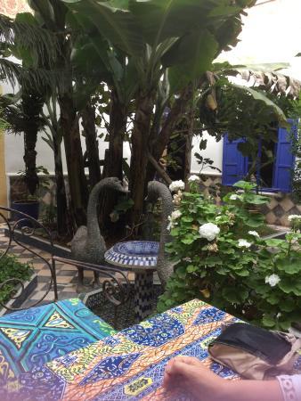 Riad du Figuier: Patio garden