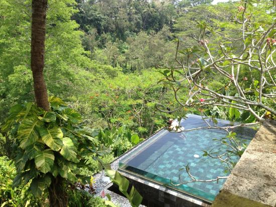 Amazing infinity pool in the rainforest picture of maya for Infinity pool ubud