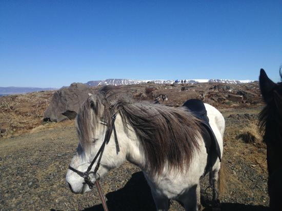 Viking Horses: On top of the world..