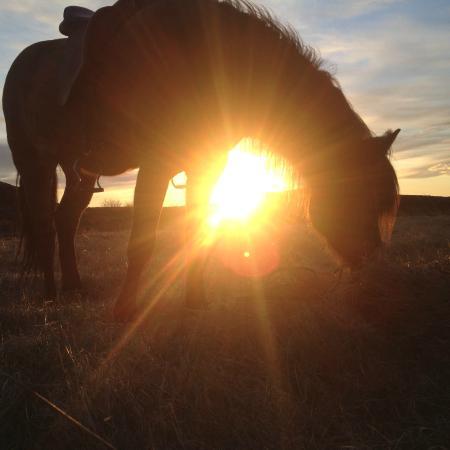 Viking Horses: Sunset
