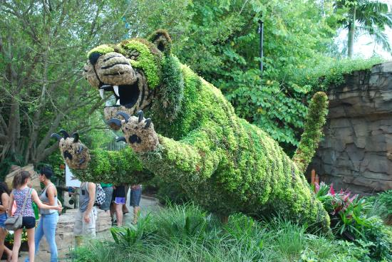 Tiger topiary - Picture of Busch Gardens, Tampa - TripAdvisor