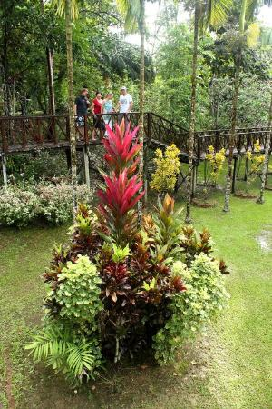Sepilok Forest Edge Resort: wildness and beauty  :-)
