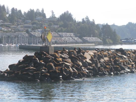 Newport S Historic Bayfront Sea Lions At Bay