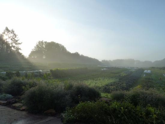 The Black Swan: The vegetable garden