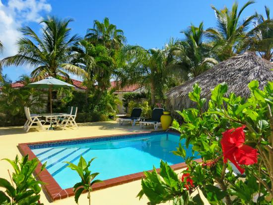 Harbour Club Villas & Marina: Poolside relaxation surrounded by coconut palms and flowering shrubs