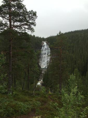 Henfallet naturreservat