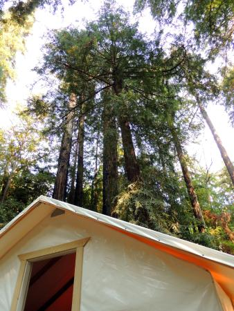 Fernwood Resort: Sleeping under the redwood trees!